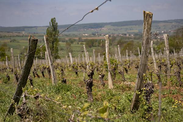 À la découverte des Grands Crus de Bourgogne en seulement une journée !
